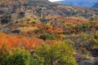 DARBOĞAZ - Yaprakların Sonbahardaki Renk Cümbüşü