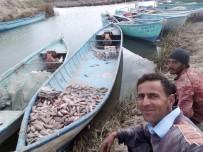 İBRAHIM ERDOĞAN - Çin Sazanı Balıkçıların Korkulu Rüyası Oldu