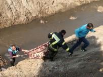 SOKAK HAYVANI - Trafik Kazası Sonrası Dereye Düşen Sokak Köpeği Kurtarıldı
