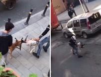 PİTBULL - İstanbul'da Pitbull Vahşeti Kamerada