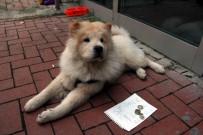 ONDOKUZ MAYıS ÜNIVERSITESI - Köpeğine Mama Alabilmek İçin Bu Yönteme Başvurdu