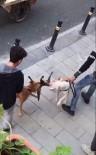 PİTBULL - Gaziosmanpaşa'da Yaşanan Pitbull Vahşeti Kamerada