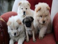 YAVRU KÖPEKLER - Bagajda bulunan yavru köpekler ihaleyle satılacak