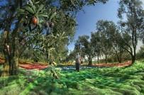 MEHMET ASLAN - Bursa Her Mevsim Başka Güzel