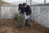 ÇANKIRI VALİSİ - Çankırı'da 220 Adet Fidan Toprakla Buluştu