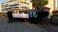 KıZıLCA - Dumlupınar'da 37 Koyun Hibe Olarak Dağıtıldı