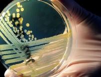 NANO - Hastalıklı dokuları aydınlatan nano-bileşke üretildi