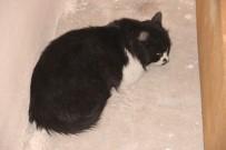 ERDAL ÇAKıR - İplik Kediyi Ayağından Etti