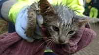 YAVRU KEDİ - Konteynıra Sıkışan Kedi 24 Saat Sonra Kurtarıldı