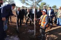 ŞANLIURFA VALİSİ - 'Şehrimi Seviyorum Ağacımı Dikiyorum' Kampanyası Devam Ediyor