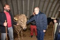 İSMAİL BALABAN - Başkan Kafaoğlu Hayvan Pazarını İnceledi
