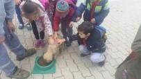 SOKAK HAYVANLARI - Geçici Bakımevinde Öğrencilere Hayvan Sevgisi Aşılanıyor