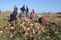 MUŞLU - Sağanak Yağış Çiftçinin İşini Zorlaştırdı