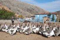 HOBİ BAHÇESİ - Tüp Deposunda Hobi Olarak Başladı, 350 Kümes Hayvanı Besliyor