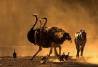 İZMIR DOĞAL YAŞAM PARKı - Doğal Yaşam Parkının En Güzel Fotoğrafı Seçildi