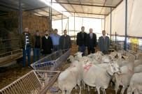 İŞKUR - Eski Hükümlüler Koyun Besleyecek
