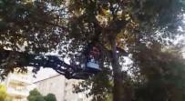 İTFAİYE ERİ - Gaziantep'te Ağaçta Mahsur Kalan Kediyi İtfaiye Kurtardı