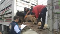Genç Çiftçiler Köylerine Dönüyor