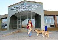 SOKAK KÖPEĞİ - İşkence Edilen Köpeği İzmirli İş Kadını Sahiplendi