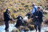 AHMET ÖZKAN - Mahsur Kalan Hayvanları Kurtarma Çalışmaları Sürüyor