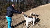 OSMANGAZI BELEDIYESI - Sokak Hayvanlarına Sosisli İlaçlama