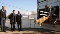 ABDULLAH ÇIFTÇI - Yalova'da 14 Genç Çiftçiye 518 Koyun Dağıtıldı