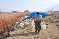 MıSıR - 70 Yaşında Organik Ördek Çiftliği Kurdu