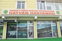 BIYOKIMYA - Tam Teşekküllü 'Hayvan Hastanesi'