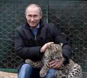 RUSYA DEVLET BAŞKANı - Putin'in Leoparı Abhazya'da Yakalandı