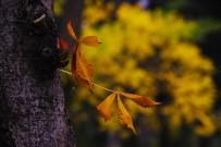 PORSUK ÇAYı - Sonbaharın Renkleri Büyülüyor