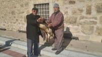 PELIKAN - Çiftlik Yakınına Düşen Yaralı Pelikan Son Anda Kurtarıldı