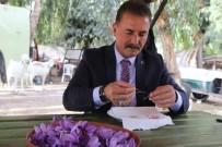KIMYA - Dünyanın En Pahalı Baharatı Mersin'de Yetişiyor
