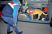 TRAFİK CEZASI - Jandarmadan Narkotik Ve Bomba Arama Köpekli Asayiş Uygulaması