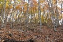 DUMANLı  - Osmaniye'de Meşe Ve Kayın Ormanları Bakıma Alındı