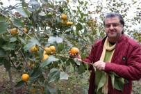 TRABZON HURMASI - Bu Meyveye İsmini Verdi Ama...