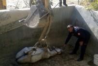 Derik'te Boş Sulama Havuzuna Düşen At, Uzun Uğraşlar Sonucu Kurtarıldı