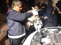 MAHMUT YıLDıRıM - Motor Kısmına Sıkışan Kedi Uyutularak Kurtarıldı