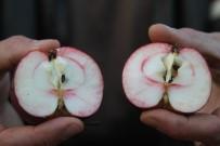 Ardahan'ın İçi De Dışı Da Kırmızı Elması Tescillenecek