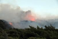 ŞİDDETLİ RÜZGAR - Datça'daki Orman Yangını Söndürüldü