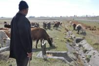 DOĞURGANLIK - Kars Ziraat Odası Başkanı Ertaş, 'Süt Ürünlerine Zam Geldi, Süte Zam Gelmedi'