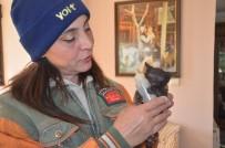 HAYVAN HAKLARı - Evinde Onlarca Kedi Ve Köpekle Birlikte Yaşıyor