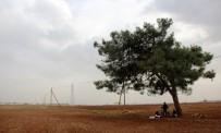 ÇAKAL - Babası Esad Bombasıyla Ölen 5 Aylık Emira Ağaç Altında Yaşıyor
