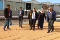 ŞEYH ŞAMIL - Bağcılar Mahallesi Asfaltlanıyor