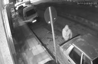 SÜRÜCÜ KURSU - Hırsızı Patates Atarak Kovaladı