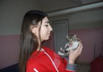 YAVRU KEDİ - Üşüyen Yavru Kediyi Sokakta Bırakmadı, Okula Getirdi