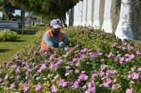 MAHMUTLAR - Alanya'ya 250 Bin Çiçek