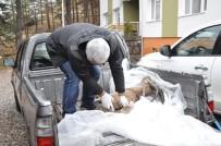 FıRAT ÜNIVERSITESI - Dağ Keçisi Ölümlerinde 'Veba' Şüphesi