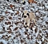 Erzincan'da Çobanlar Kar Nedeniyle Yaylada Mahsur Kaldı