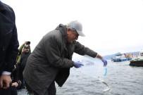 İZMİT KÖRFEZİ - İzmit Körfez'ine 6 Bin Balık Bırakıldı