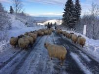 Kar Yağınca Hazırlıksız Yakalandılar